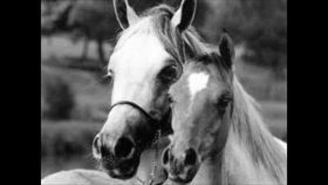 Cache Co. farm quarantined amid equine herpes case