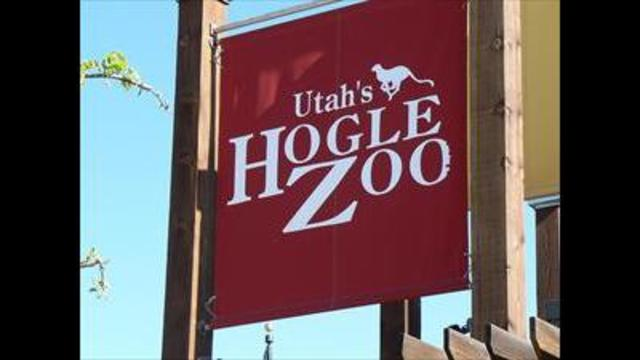 ABC 4 Utah and the Hogle Zoo team up for Viewer Appreciation Day
