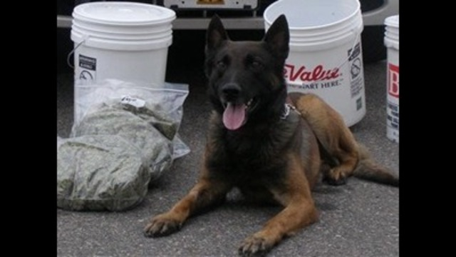 UHP police dog struck by semi on I-80