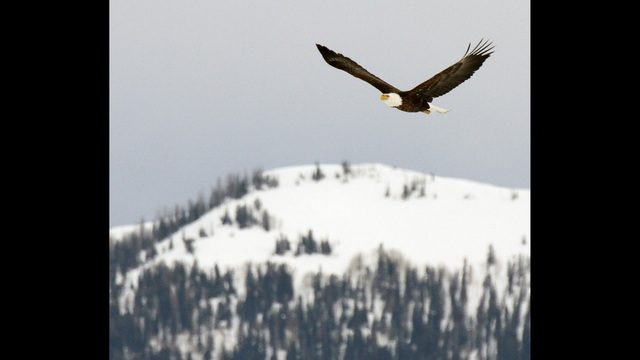 See Bald Eagles for Bald Eagle Day