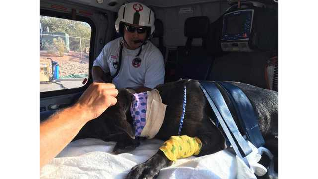 Authorities: Gunman shot by police after shooting K9 dog