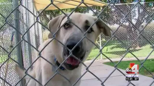 Bill that would ban gas chamber use at animal shelters fails